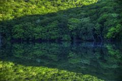 新緑の沼より