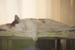 暑さに負けた猫