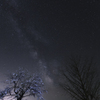 夜桜リトライⅡ