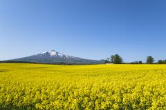 山と菜の花畑