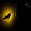 夜の黒猫の時間