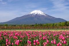 5月の花の都公園