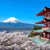忠霊塔の桜3