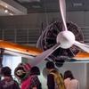夏の国立科学博物館(10)