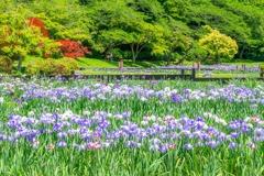 浜松フラワーパーク(7)