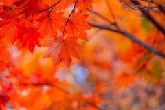 秋の志賀高原(7)