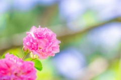 浜松フラワーパーク(14)