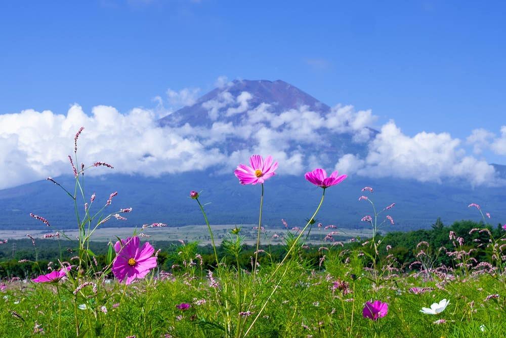 初秋の山中湖(4)