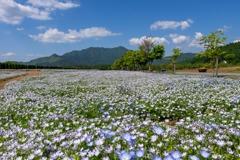 花の都公園(ネモフィラ)