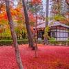 秋の京都(13)