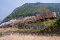 トロッコ列車の旅(2)