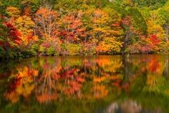 紅葉の鏡池(2)