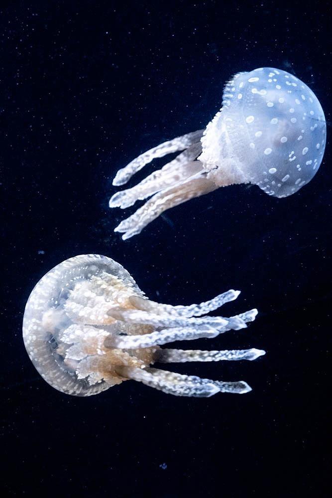 美ら海水族館(9)