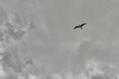 大空に羽ばたく者
