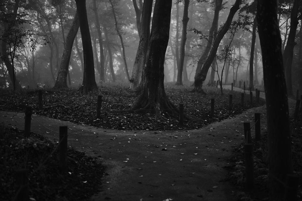 霧の森の小径