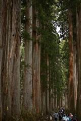 神宿る樹々