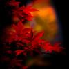 染まる時 ~秋色~