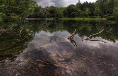 池に眠る大木