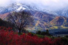 冬樹の一本桜