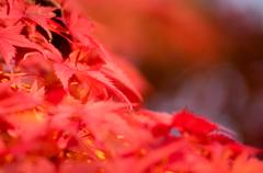 紅葉を撮りに行く