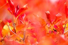 秋のおわり