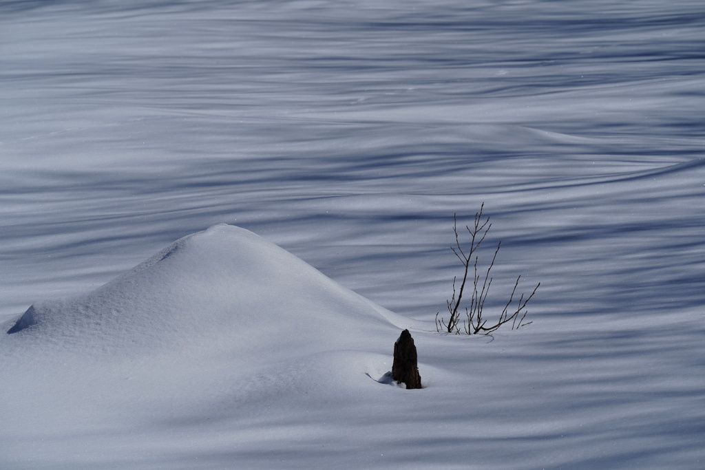 雪原の縞々
