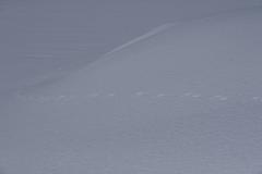 雪面の足跡 その2