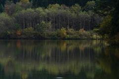 池のほとり3