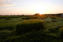 麦畑と夕陽2