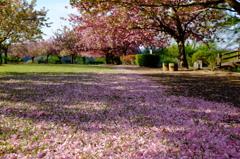 八重桜の咲く公園 その2