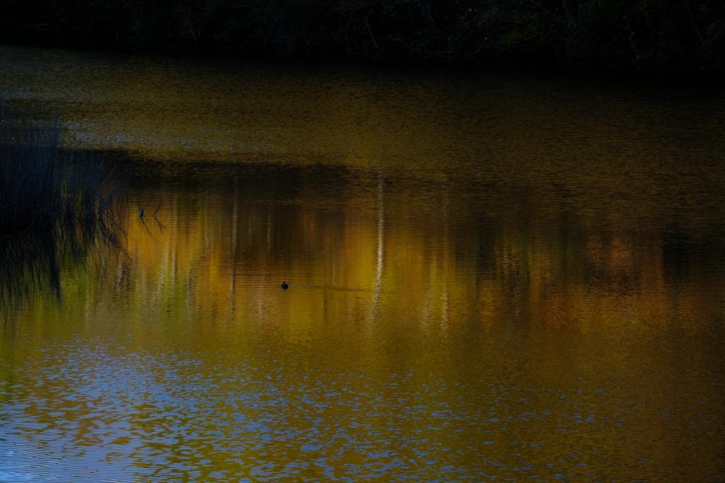 朝の静かな水面