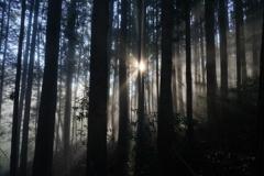 眩しき里山の朝3