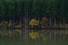 池のほとり4