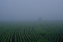 霧の風景2