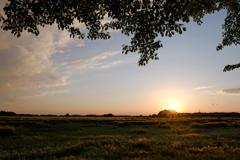 麦畑と夕陽