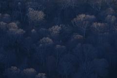 朝日が照らす木々