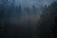 霧の朝 その4