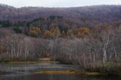 冬を迎える地蔵沼