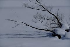 雪面の足跡