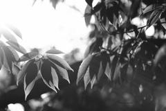 朝の光と木の葉