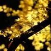 黄葉の輝き その2