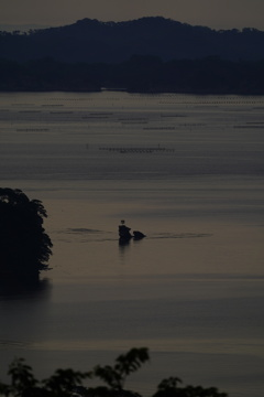 朝の松島湾5