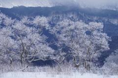 白い枝の木