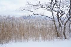 冬枯れの景