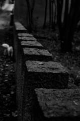 塀とワンコ