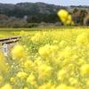 菜の花に続く線路