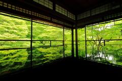 緑のリフレクション