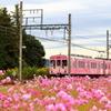 桃色忍者列車
