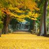 黄金色の参道