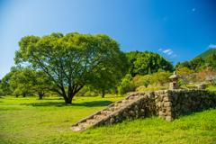 大木と石段